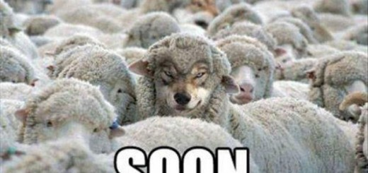 soon-wolf-with-sheep[1]